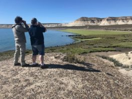 Birding around Puerto Madryn, Peninsula Valdes and Trelew area in Patagonia Argentina with Ted Mawson from USA